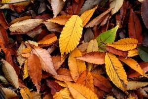 Mooie huid in de herfst