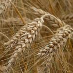 Is glutenvrij het antwoord op huidklachten?