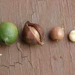 De gezondheidsvoordelen van Macadamia-olie