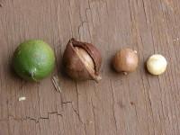 macadamia-olie