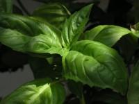 tomaat-basilicum sap